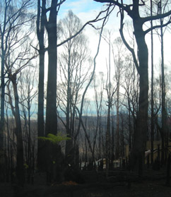 Slow recovery after the 2009 Black Saturday fires in Victoria.