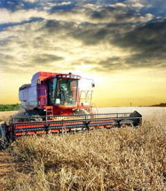 Australian farmers on the whole are not happy about the lifting of bans on GMO crops in Australia recently.