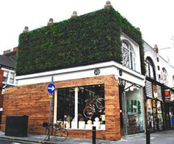 Colin Firth's new project in Chiswick- Eco Age promoting all things sustainable and beautiful.