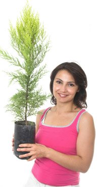 Strat your Green Christmas by buying a Christmas tree in a pot, it can grow as your family does and is waste free!