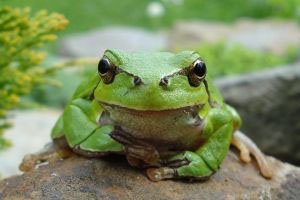 Join the Prince's Rainforest Project in spreading the world about the plight our tropical rainforests.